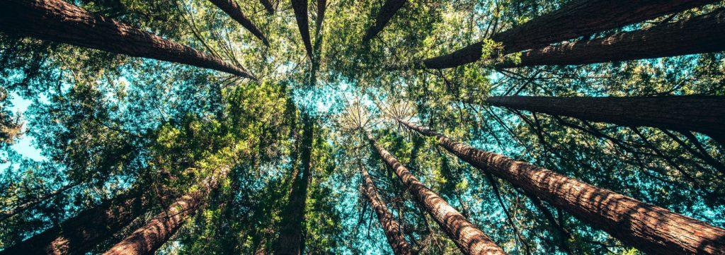 os benefícios da natureza para a saúde