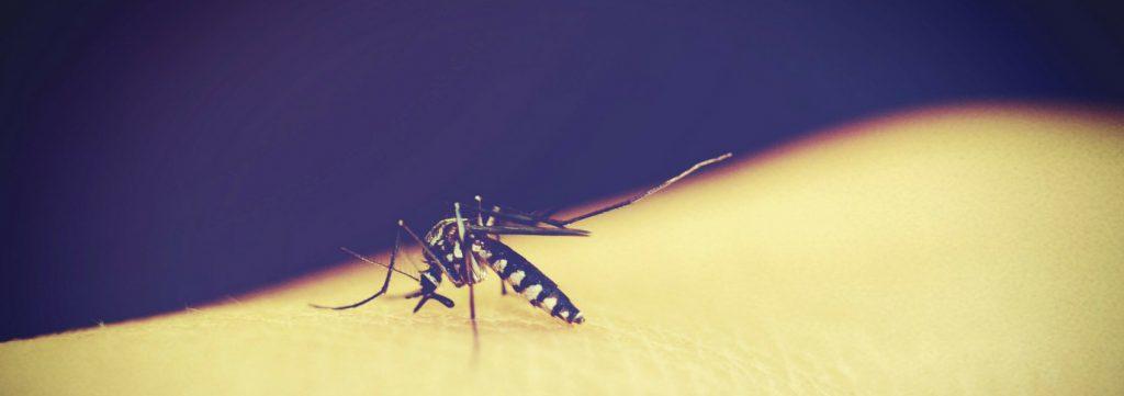 nova forma de luta contra o dengue