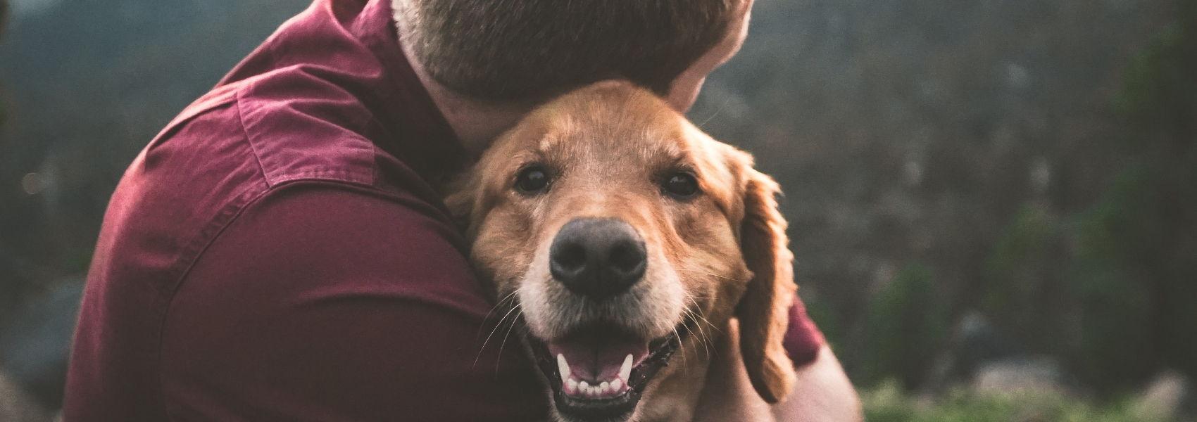 animais ajudam na luta contra o cancro