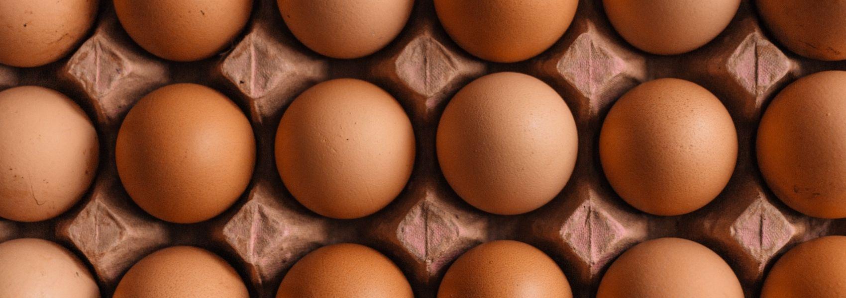 Cascas de ovos podem ajudar a tratar fraturas ósseas