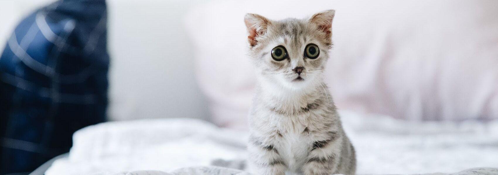 Afinal, os gatos também sentem afeto pelos donos