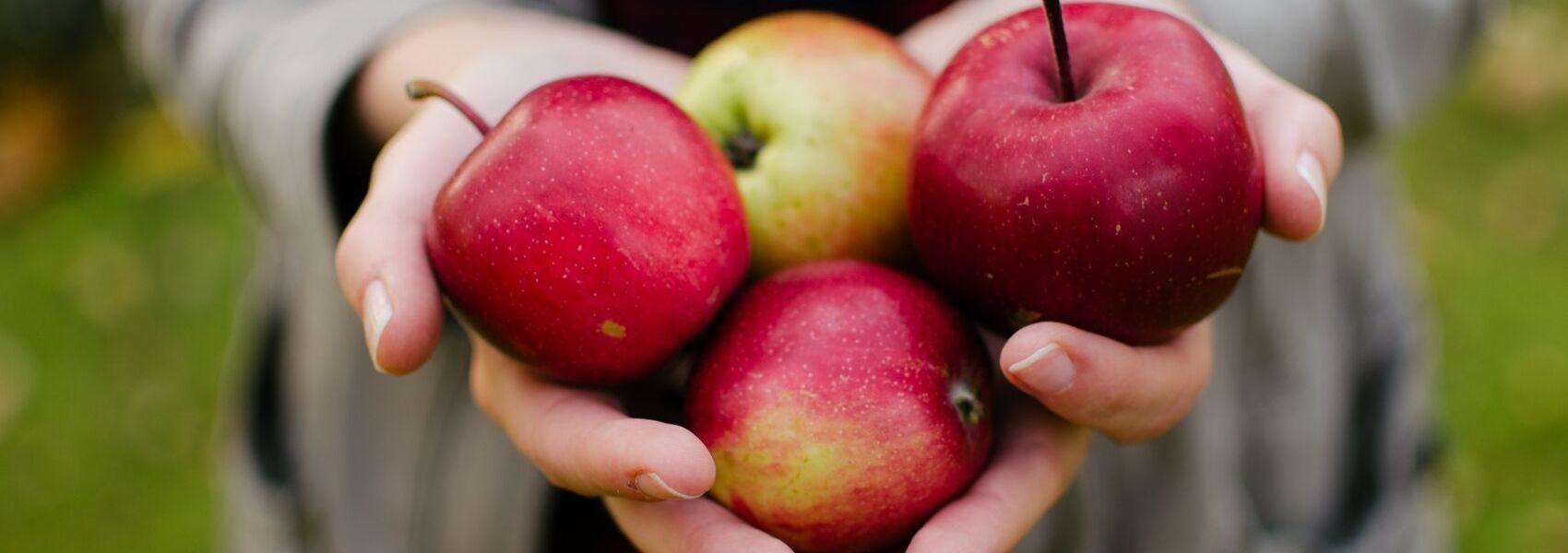 De onde vêm as frutas e legumes que enchem os pratos dos europeus?