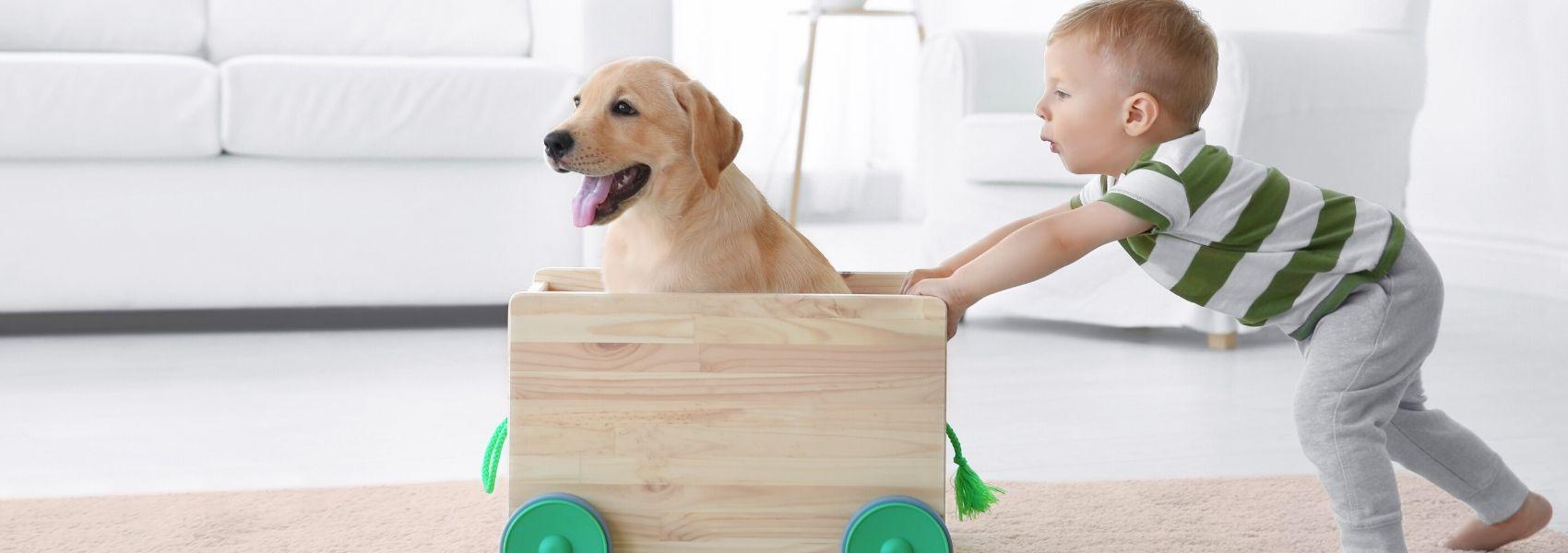 Exposição infantil a cães pode diminuir risco de esquizofrenia, sugere estudo