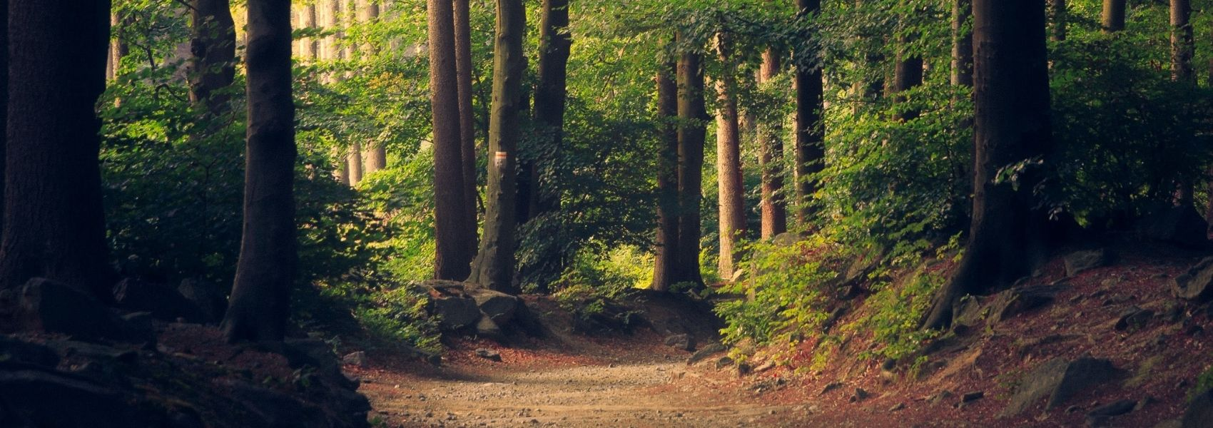 Três razões para 'dar um mergulho' na floresta