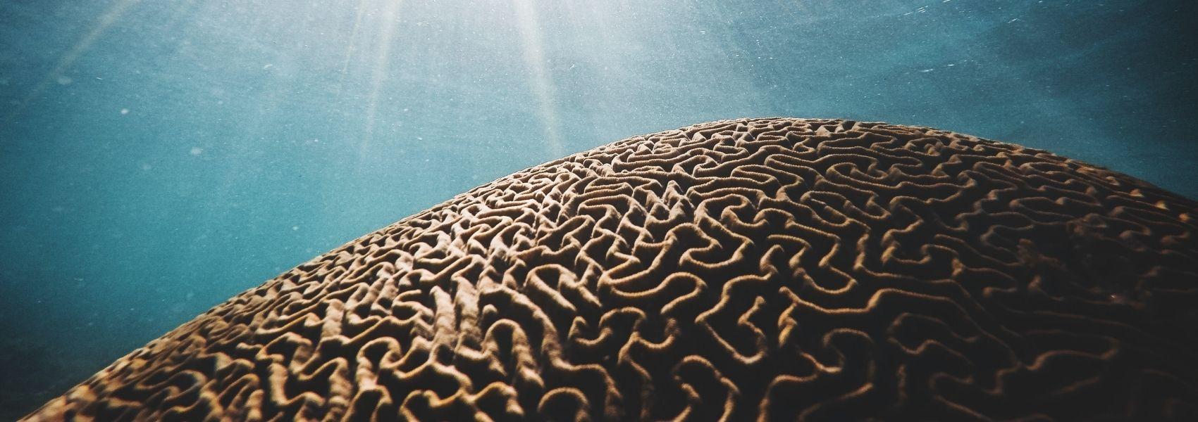 Dia Mundial do Cérebro sensibiliza para esclerose múltipla